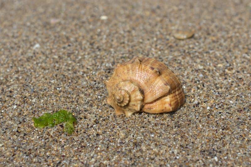 Textura da areia e do shell molhados do mar imagem de stock royalty free