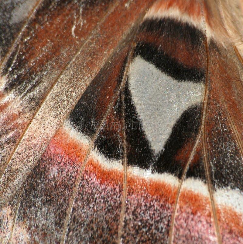 Textura da asa da borboleta imagens de stock