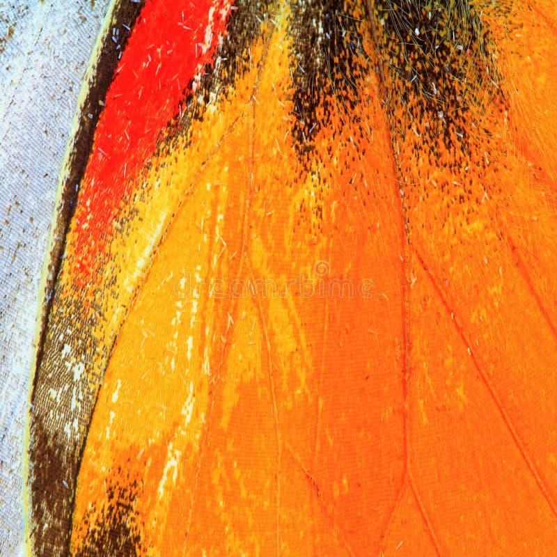 Textura da asa da borboleta fotos de stock royalty free