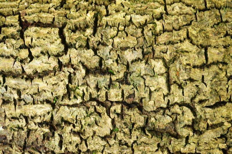 Textura da casca foto de stock royalty free