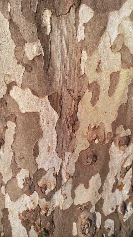 Textura da casca de árvore da textura foto de stock