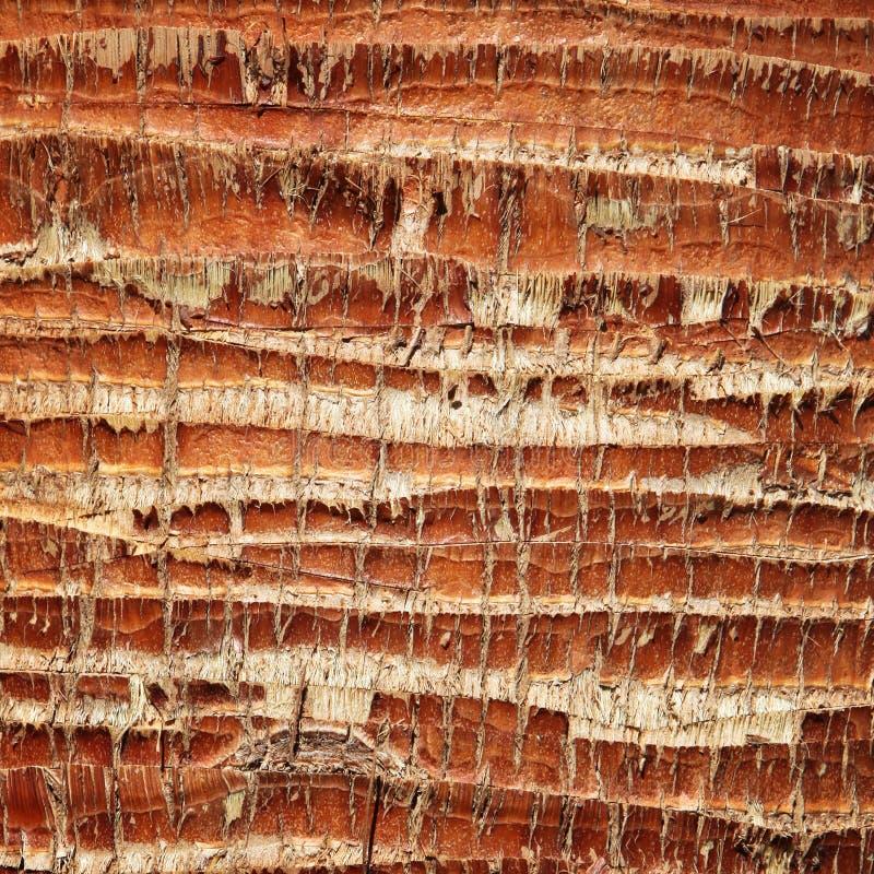Download Textura Da Casca De Palmeira Imagem de Stock - Imagem de áspero, sumário: 29836281