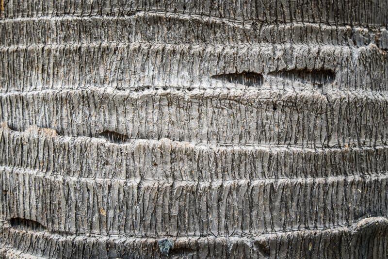 Textura da casca de palmeira imagens de stock