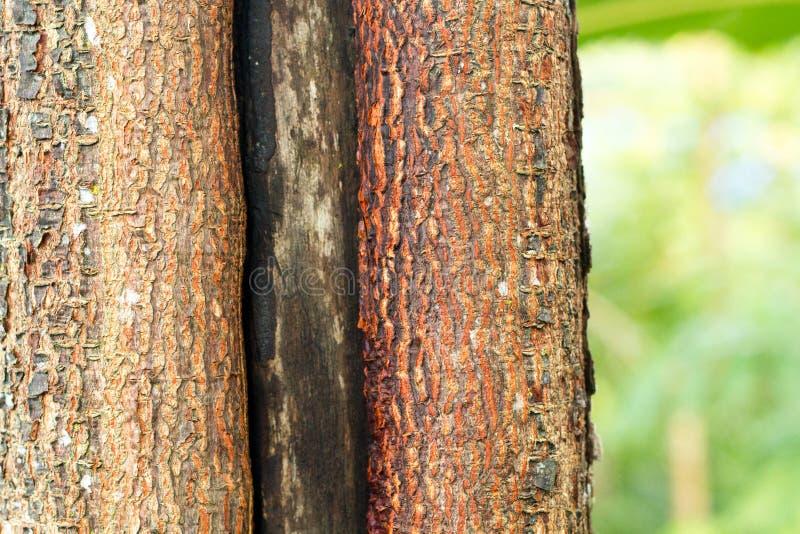 Textura da casca marrom de uma ?rvore imagens de stock