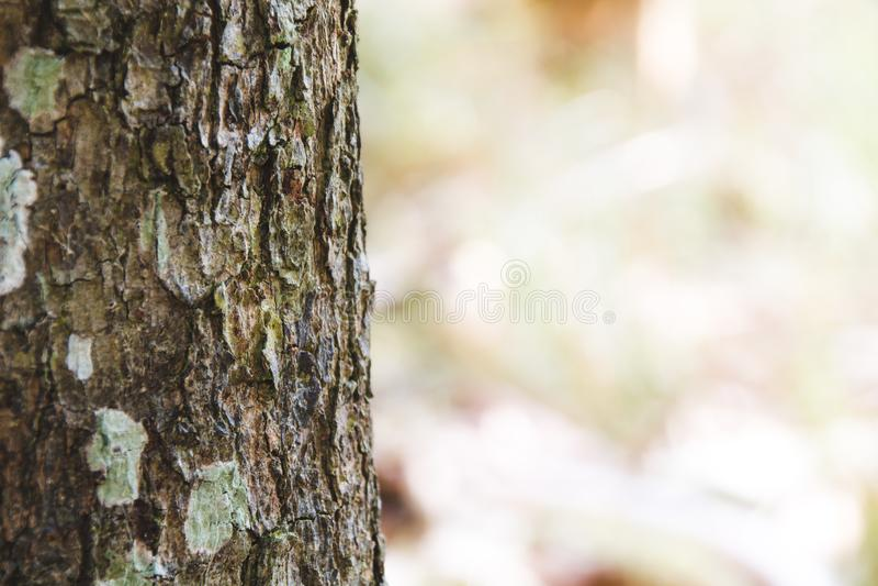 Textura da casca marrom de uma ?rvore foto de stock royalty free