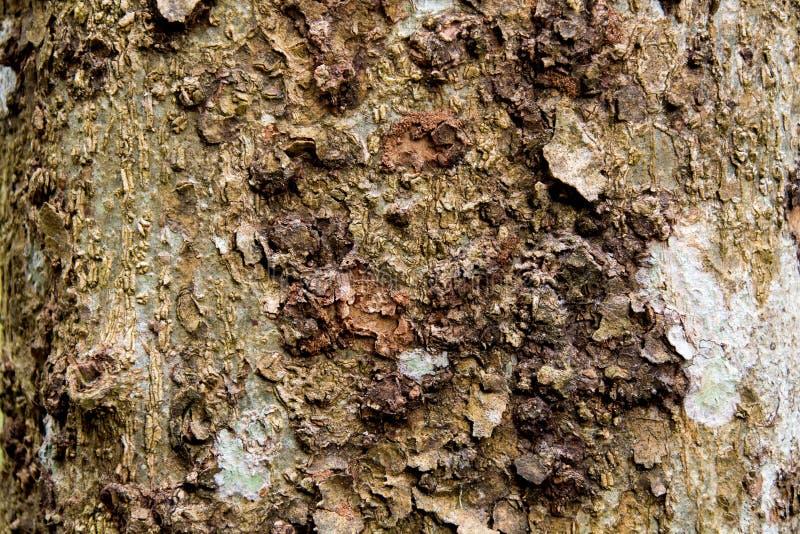 Textura da casca marrom de uma ?rvore fotos de stock royalty free