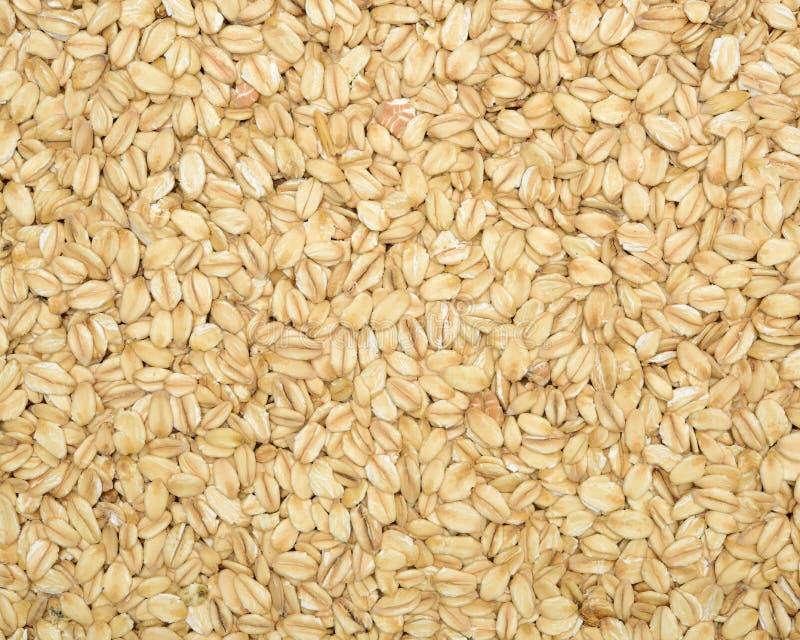 Textura da farinha de aveia fotografia de stock royalty free