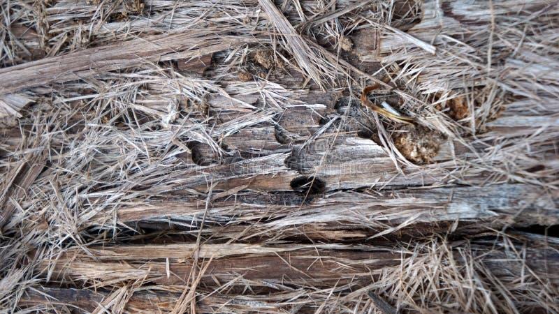 Textura da fibra da palmeira, fundo fotografia de stock royalty free