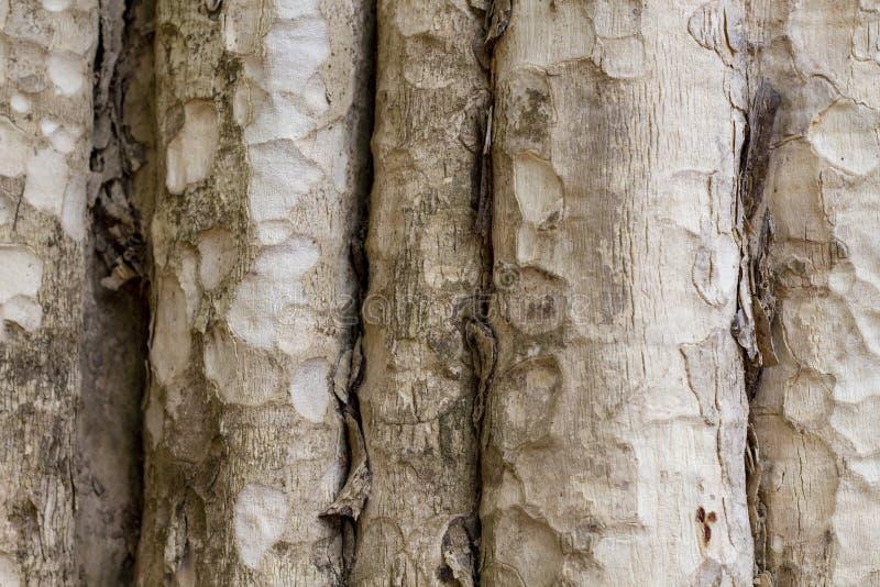 Textura da foto do tronco de árvore Fundo de madeira natural Madeira pálida com casca resistida Contexto de madeira desvanecido imagens de stock