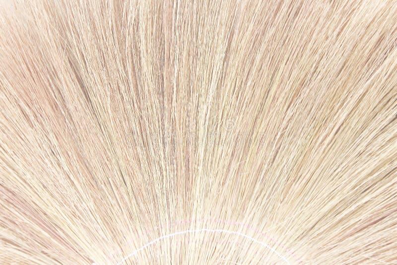 Textura da grama de vassoura para o fundo da natureza, feita da grama longa secada imagem de stock royalty free
