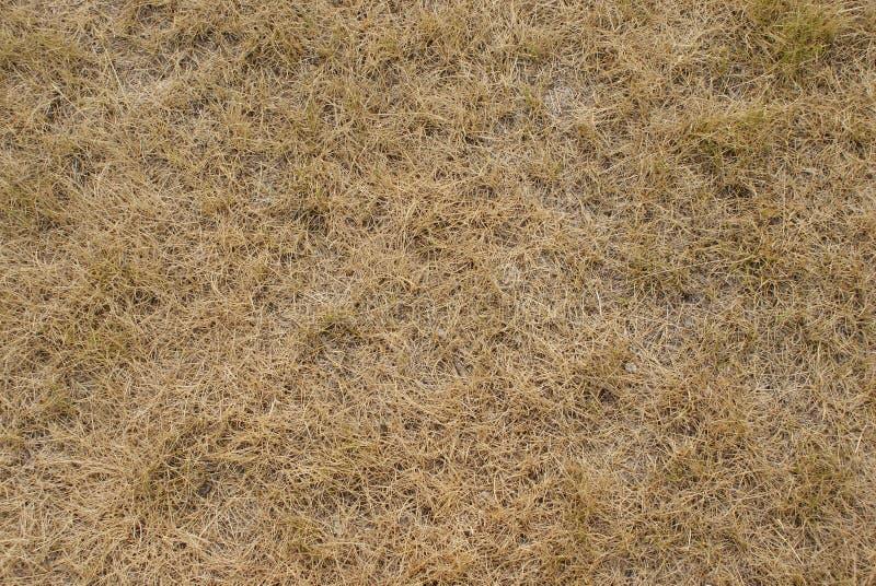 Download Textura da grama seca foto de stock. Imagem de herb, feno - 10061786