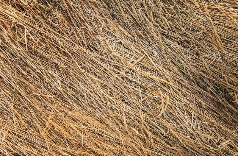 Textura da grama secada imagens de stock