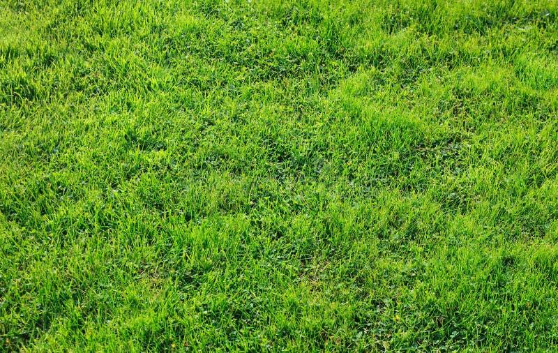 Textura da grama verde imagem de stock royalty free
