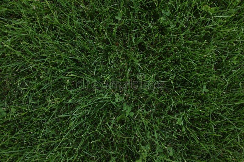 Textura da grama verde fotografia de stock royalty free