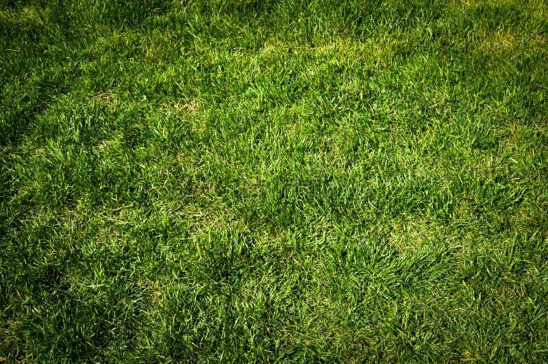 Textura da grama verde fotos de stock
