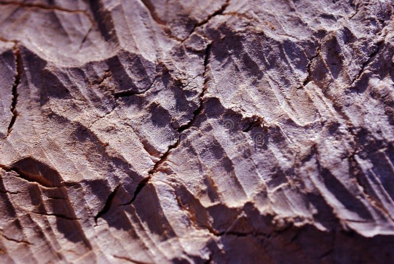Textura da madeira cor-de-rosa mordida por castores, textura orgânica foto de stock