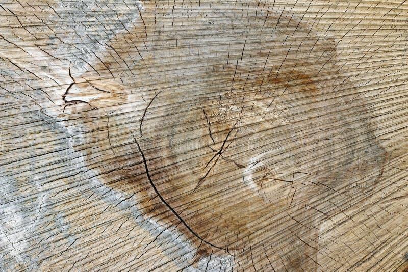 Textura da madeira - corte o tronco de árvore foto de stock