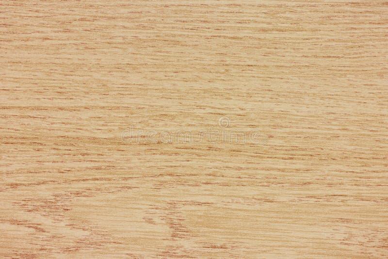 Textura da madeira de faia fotos de stock