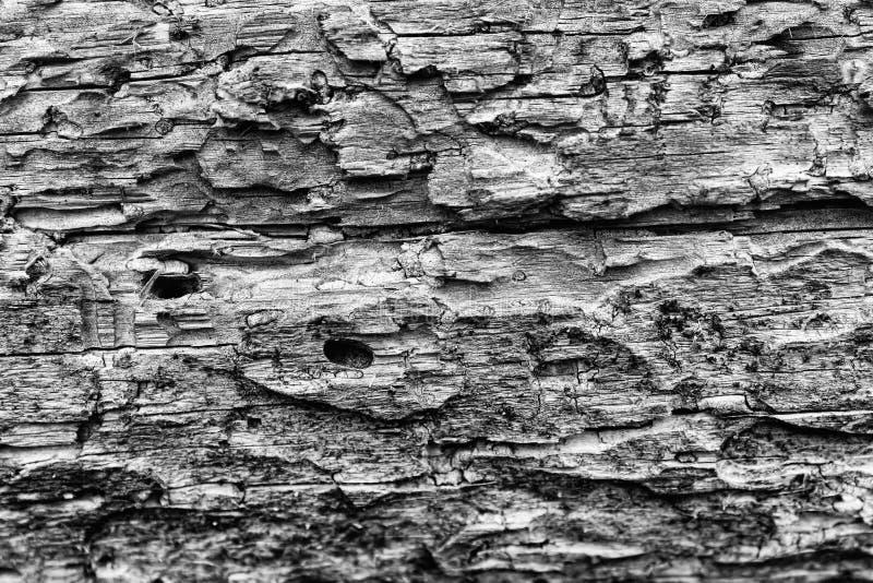 Textura da madeira de pinho fotos de stock