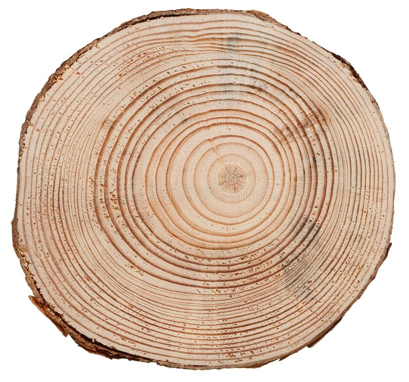 Textura da madeira do corte da cruz do tronco de árvore imagem de stock