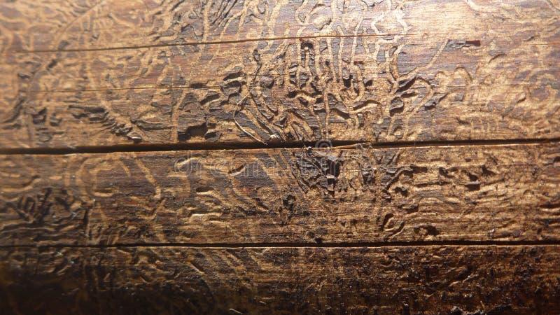 Textura da madeira velha fotografia de stock