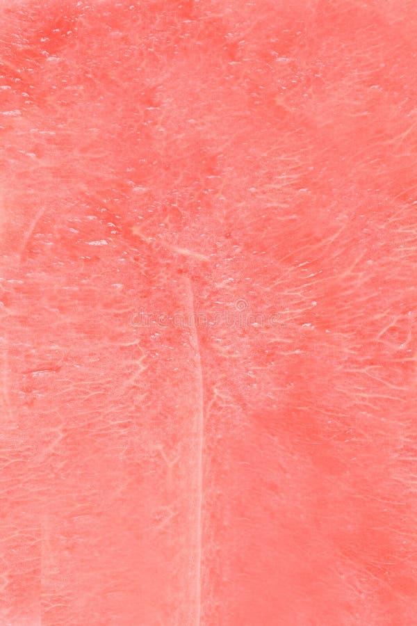 Textura da melancia imagem de stock royalty free