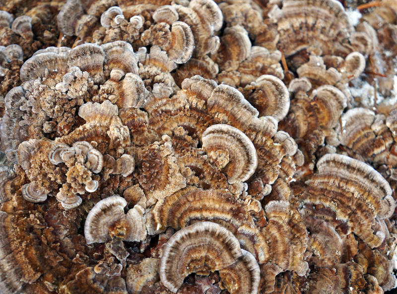 Textura da natureza, fungo fotografia de stock royalty free