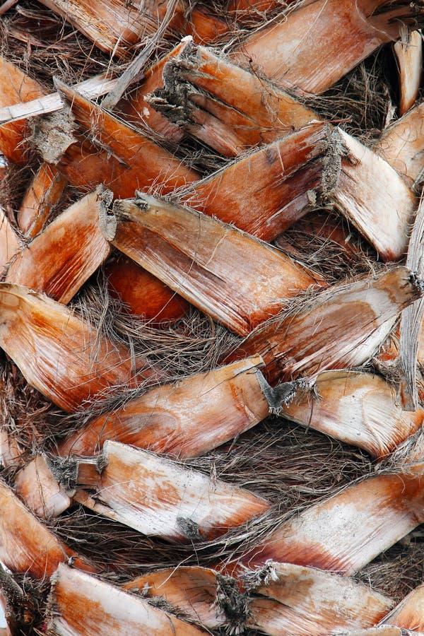 Textura da palmeira imagens de stock royalty free