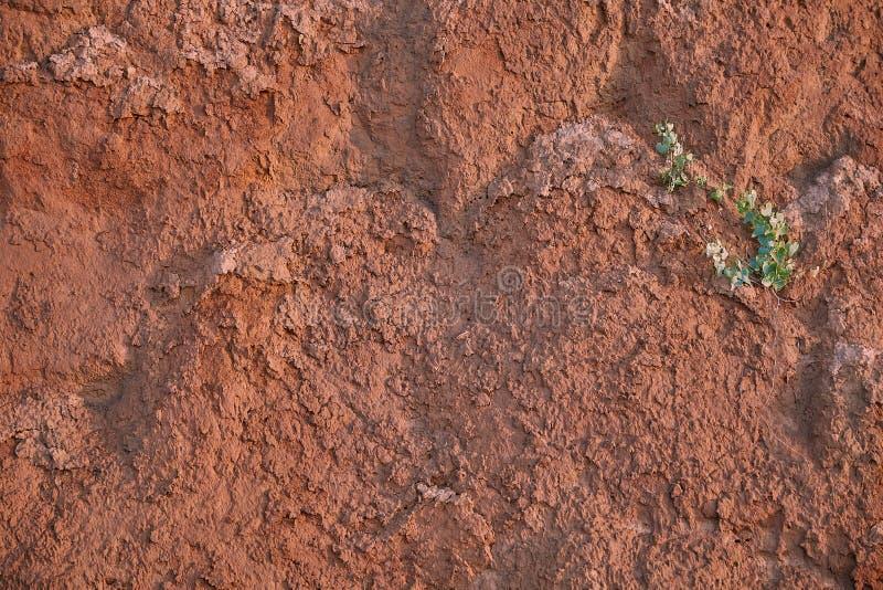 Textura da parede da areia da argila da cor vermelha com lotes das quebras da profundidade diferente na parede uma flor verde só  fotografia de stock