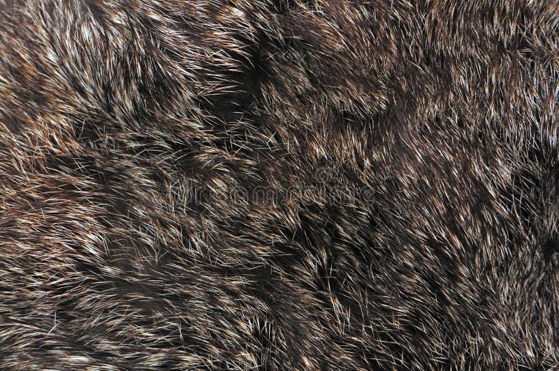 Textura da pele de Brown foto de stock royalty free