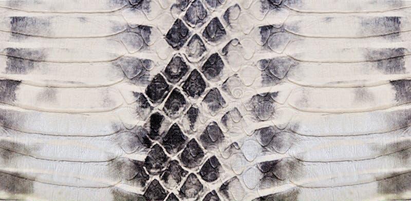 Textura da pele de serpente fotos de stock