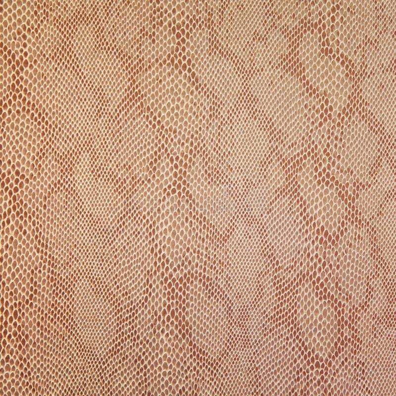 Textura da pele de serpente imagens de stock