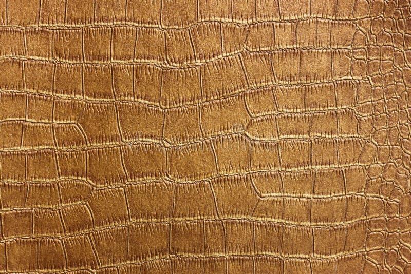 Textura da pele do crocodilo e teste padrão dourados, close up imagens de stock