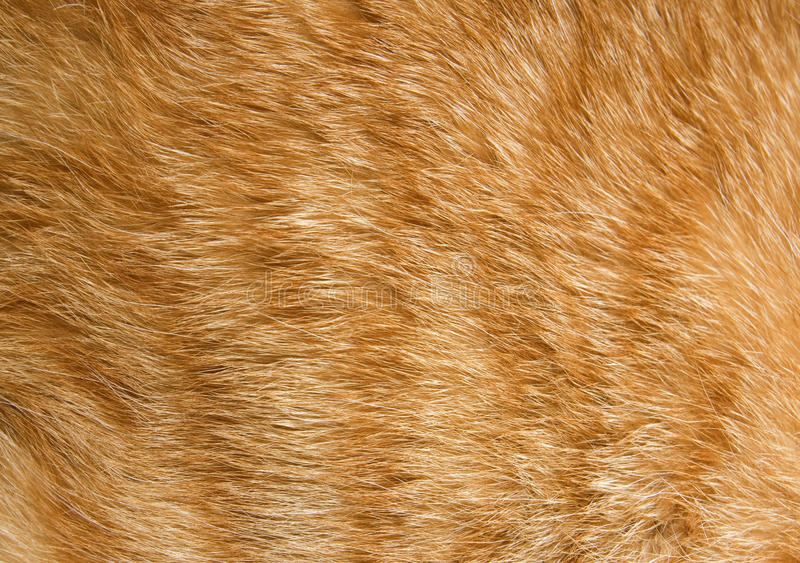 Textura da pele do gato fotografia de stock royalty free