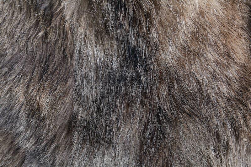 Textura da pele do lobo natural fotografia de stock royalty free