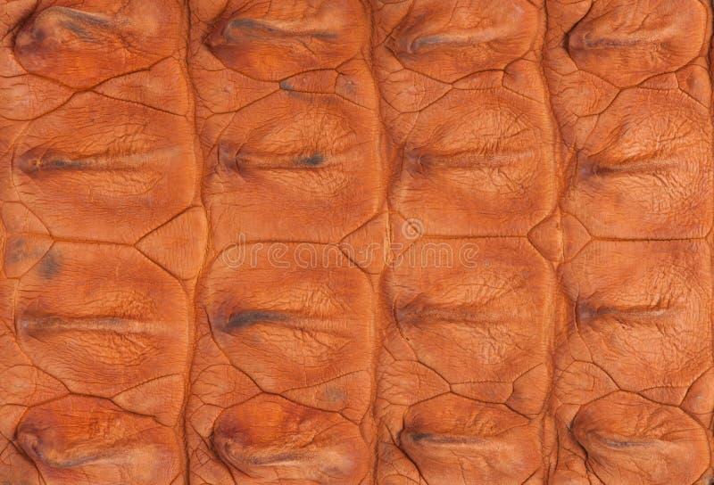 Textura da pele do osso do crocodilo imagens de stock royalty free