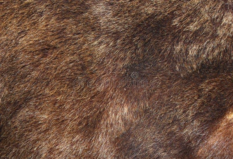 Textura da pele do urso de Brown imagem de stock royalty free