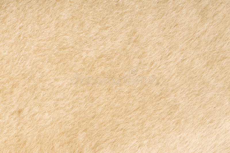 Textura da pele dos carneiros fotografia de stock
