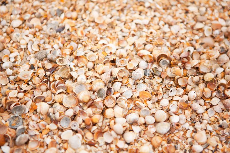 Textura da praia de Shell Conceito do curso, lazer, abrandamento Fundo com espaço da cópia para o modelo do projeto, screensaver  imagens de stock