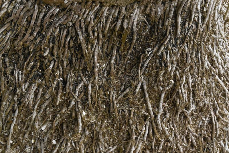 Textura da raiz da árvore imagens de stock royalty free