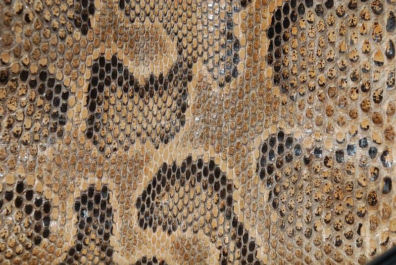 Textura da serpente imagens de stock