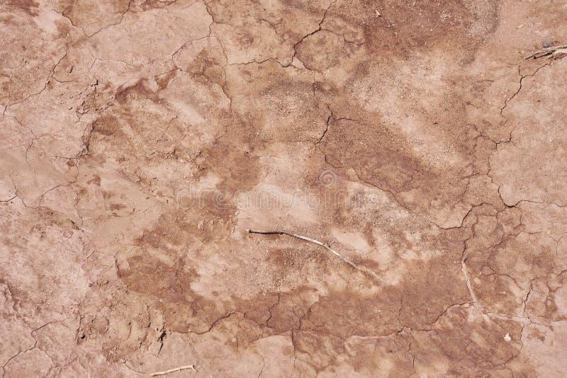 Textura da terra seca fotos de stock royalty free