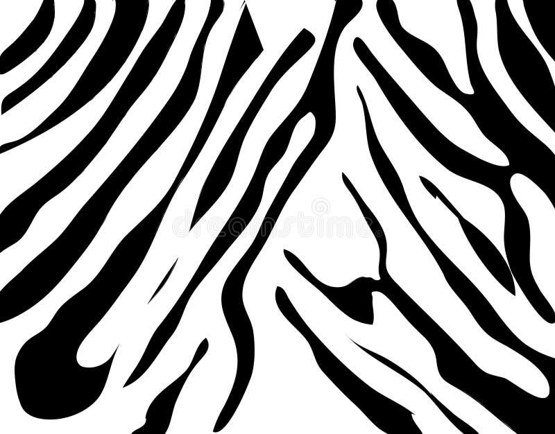 Textura da zebra preto e branco ilustração royalty free