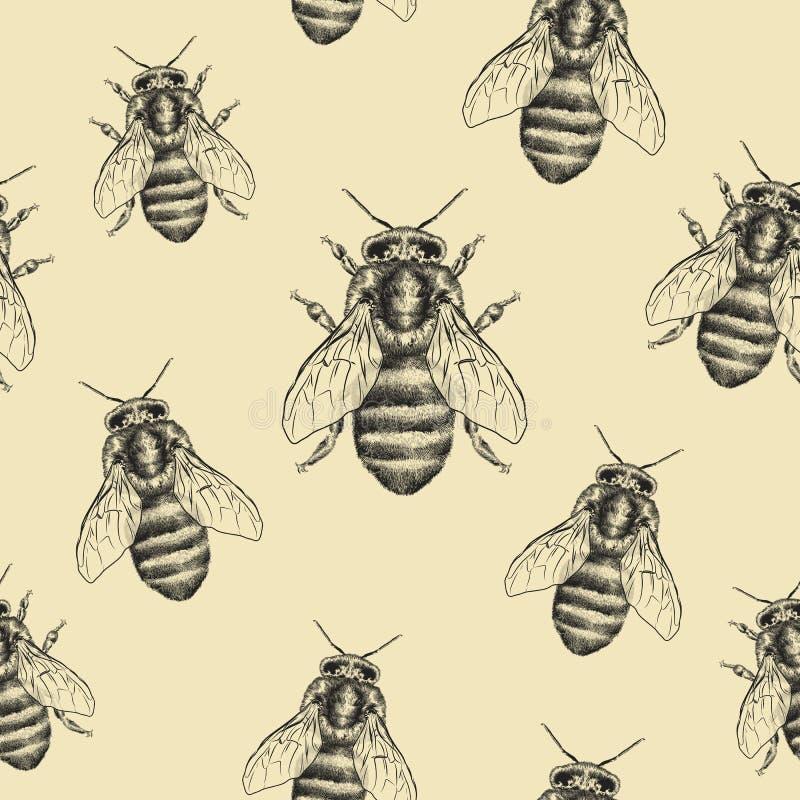 Textura das abelhas Teste padrão sem emenda Ilustração gráfica realística Fundo ilustração do vetor