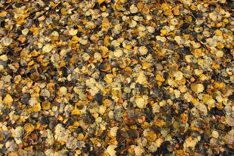 Textura das folhas de outono fotos de stock royalty free