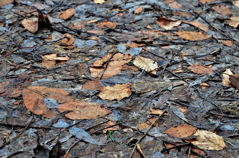 Textura das folhas imagem de stock