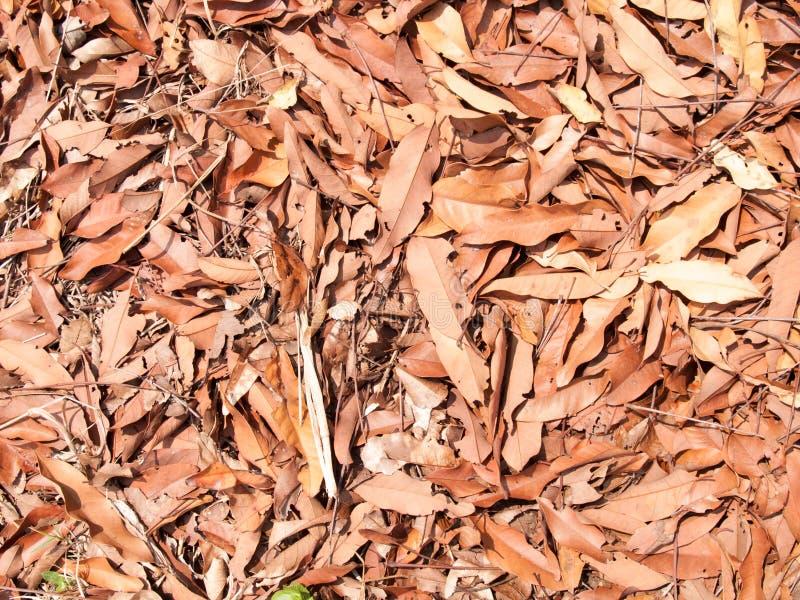 A textura das folhas secas usa-se para imagens de fundos foto de stock