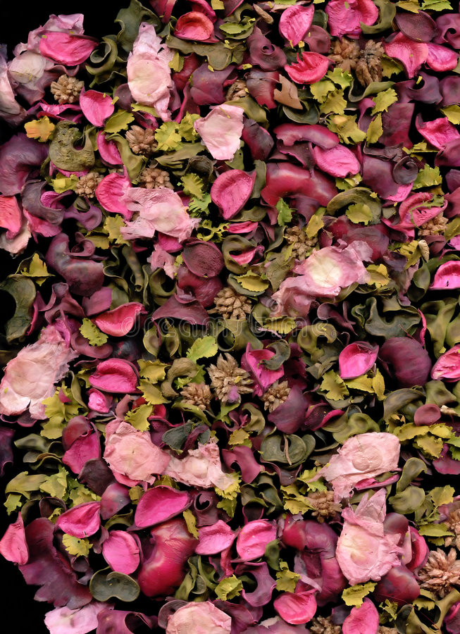 Textura das pétalas de Rosa imagens de stock royalty free