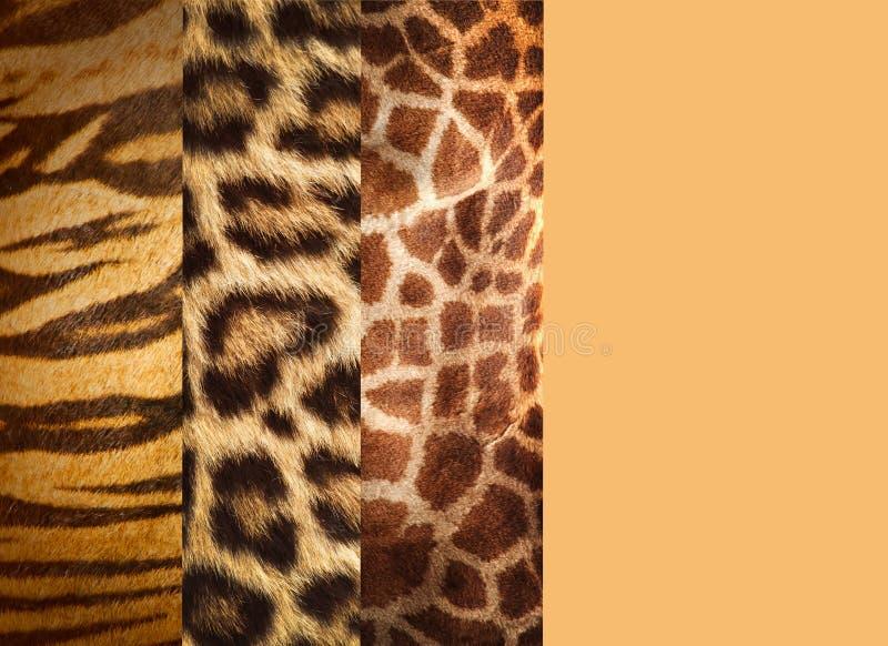 Textura das peles animais imagem de stock