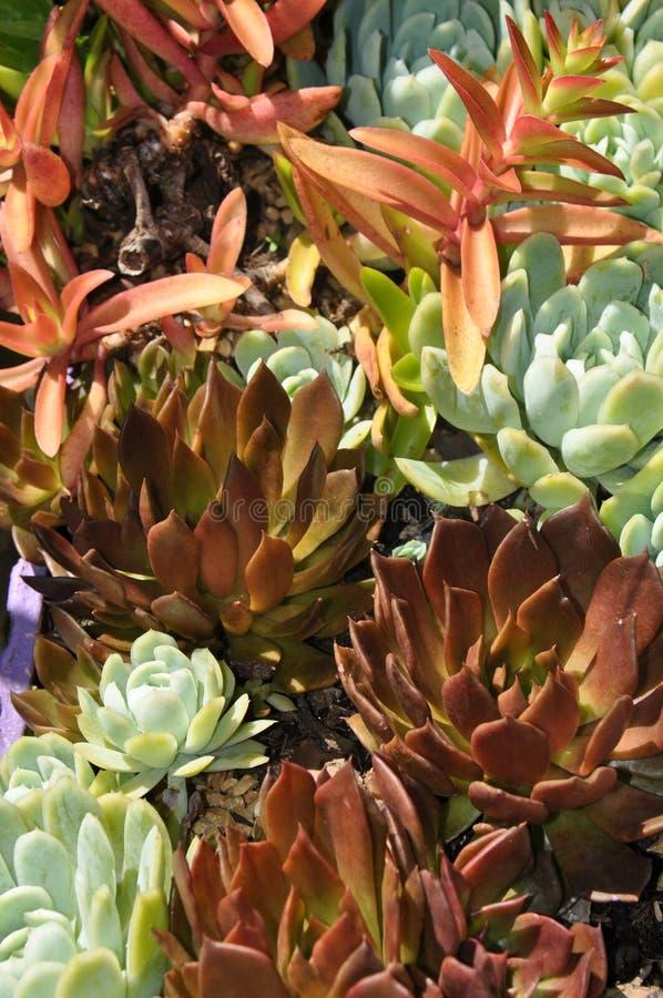 Textura das plantas fotografia de stock